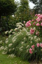 17 best images about gramin es on pinterest gardens sun. Black Bedroom Furniture Sets. Home Design Ideas