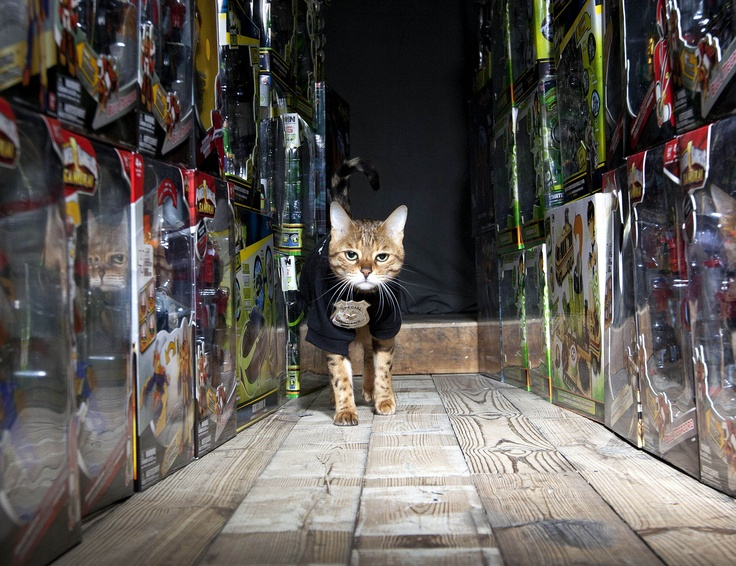 Toy company Bandai have employed the world's first security cat