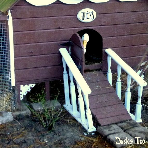 1000 ideas about duck house on pinterest duck coop for Duck hutch plans