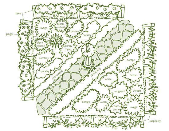 Herbal Tea Gardens: Women's Care Garden Plan—grow herbs such as black cohosh, comfrey, borage, anise and nettle.