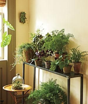 Indoor garden corner | Turn an unremarkable spot into a beautiful, inviting haven.