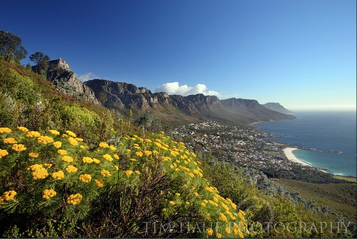 B: #BIOME   There are 6 major biomes or #floral kingdoms in the world; #fynbos is the smallest, yet richest, in terms of unique floral species. It's also unique to our part of the world.     The #landscape photo by www.timhaufphotography.com
