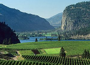 Okanagan Valley, British Columbia.  Oh how I wish I was old enough to drink wine last time I was there! But OMG, the fruit! Yummm!