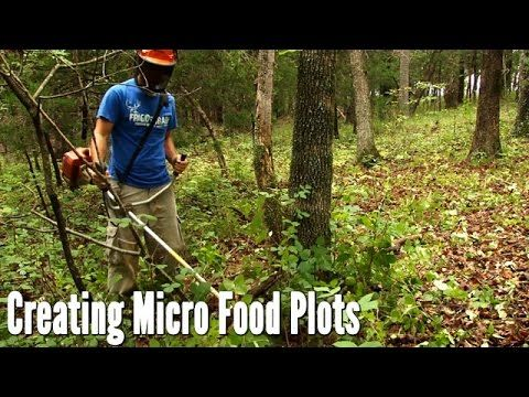 This video shows how to create a quick and easy food plot without expensive equipment that will be ready to hunt on in the fall seasons.