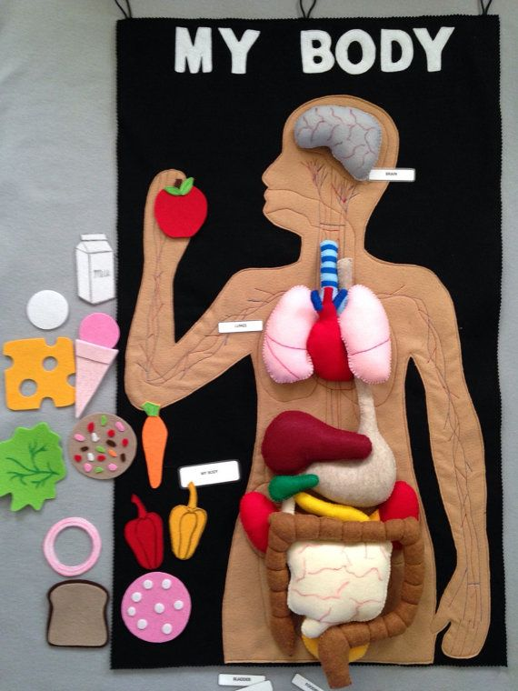 Felt human organs felt my body mat felt story play food