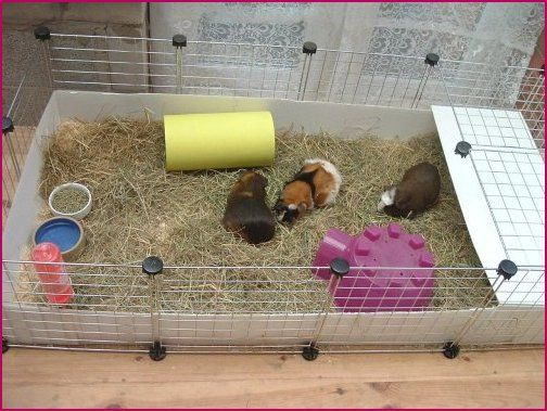 17 best images about hutches on pinterest guinea pig for Guinea pig cage for 3