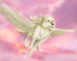 Winged white wolf