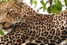 KONTOURS private tours 5 Days & 4 nights tour Big 5
