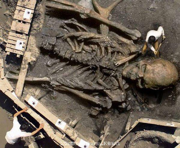 Giant Bones Found in America | Giant Humans Skeleton - The Fallen Angels : Funny, Strange