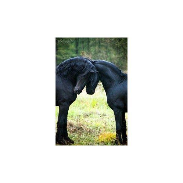 Percheron Horses via Polyvore featuring home, home decor and horse home decor