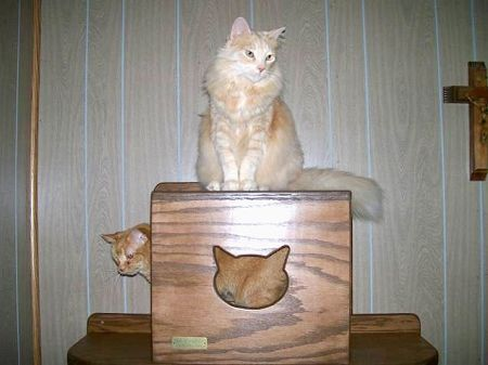 The Vertical Cat - Cat Tunnel
