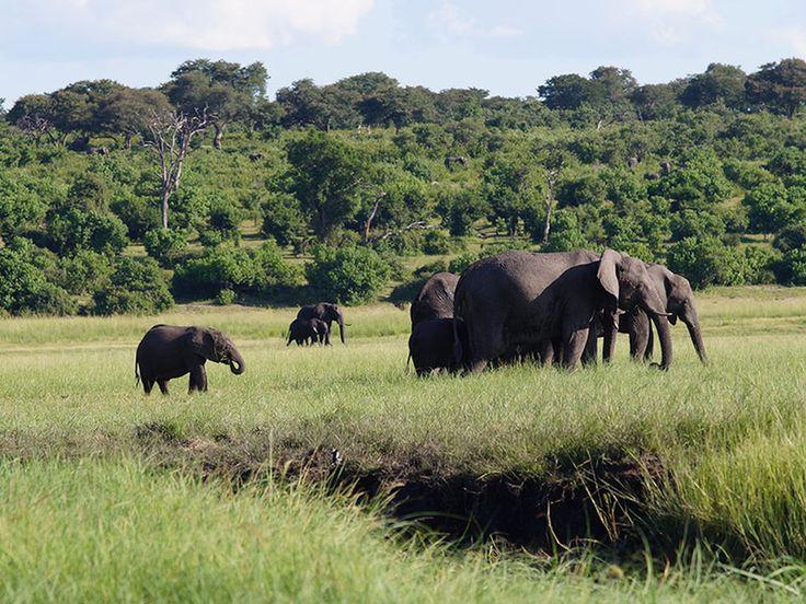 Game cruise along the banks of the Chobe National Park in Botswana    #GameCruise #Safari #Africa #Botswana #AfricanRiverSafari
