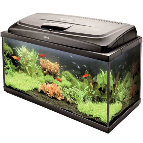 17 best ideas about large fish tanks on pinterest fish for Best fish tank heater