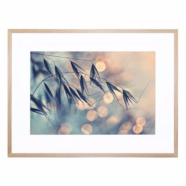 Untitled  6   Framed Print