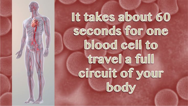 Time taken by a blood cell to travel a full circuit of your body...Our Did You Know series is a fun fact of the day spruced up with high quality graphics. http://www.scientificanimations.com/did_you_know/time-taken-blood-cell-circuit-body/ #ScientificAnimations #DidYouKnow #ThursdayDidYouKnow #BloodCell #Cell