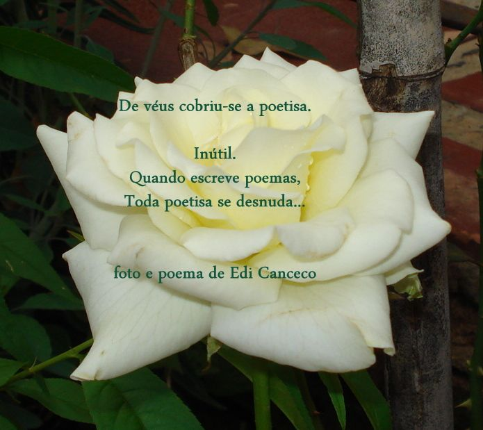 poema De véus vestiu-se a poetisa