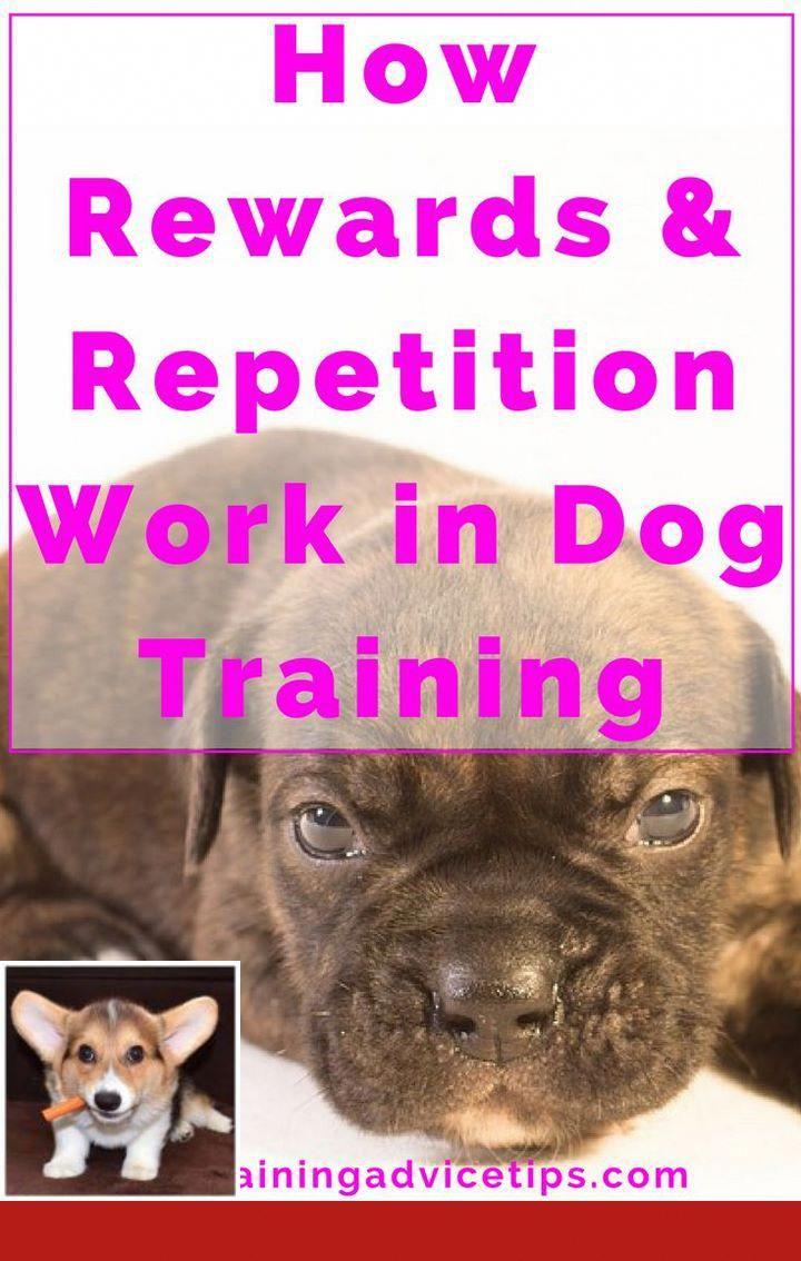 Puppy Training Boarding School Dog Training Tips Pinterest Dog