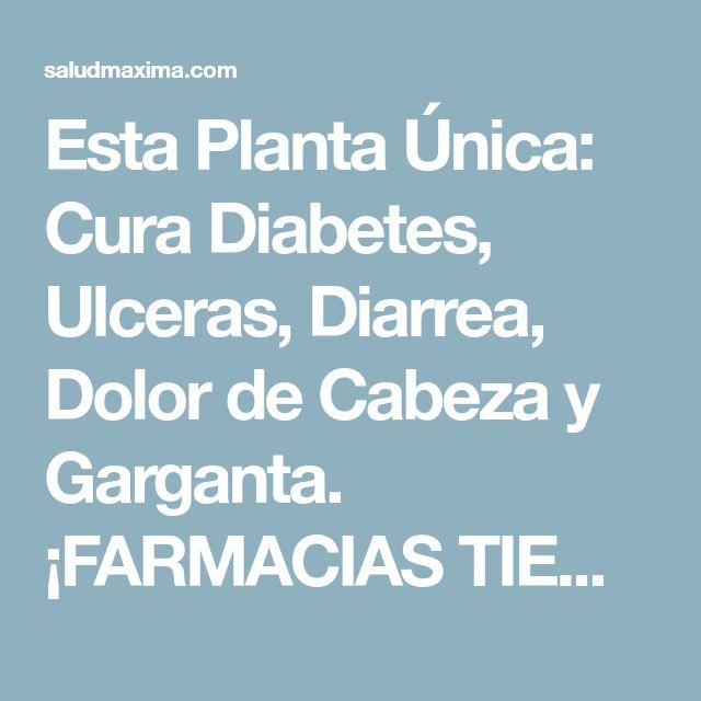 Esta Planta Única: Cura Diabetes, Ulceras, Diarrea, Dolor de Cabeza y Garganta. ¡FARMACIAS TIEMBLAN! #Compártelo