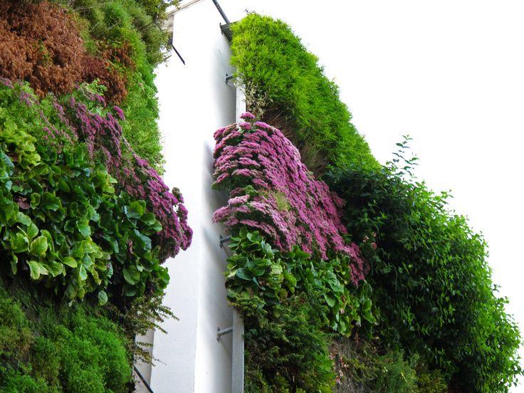 Rue d'Alsace, Paris   Vertical Garden Patrick Blanc