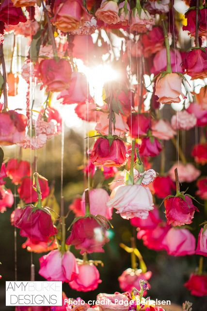 Roses hung from fishing line. This photo is very inspiring. Gorgeous! #pink Location Thomas Fogarty Winery