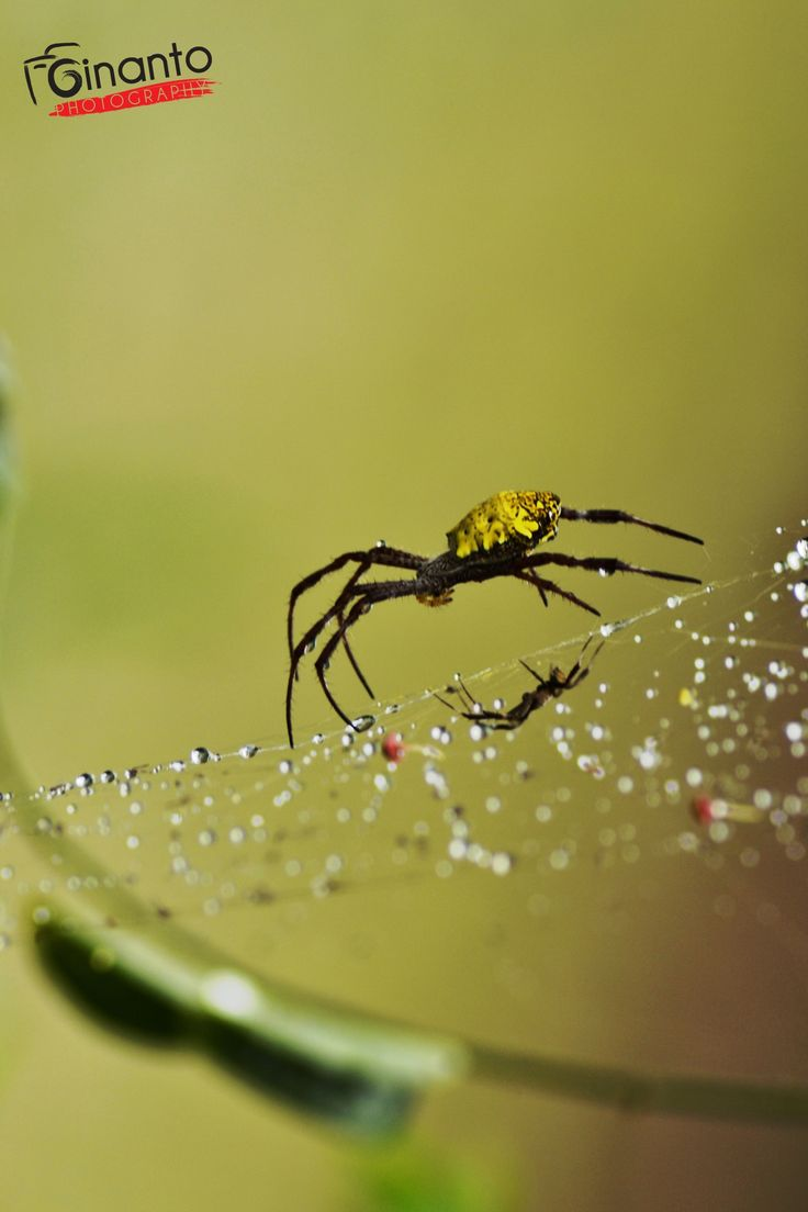 Photo Spiders by Mr Ginanto on 500px