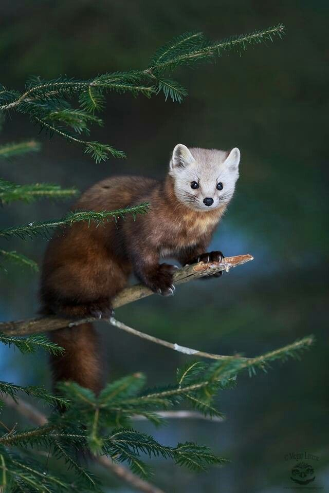 What a beautiful creature!  :)