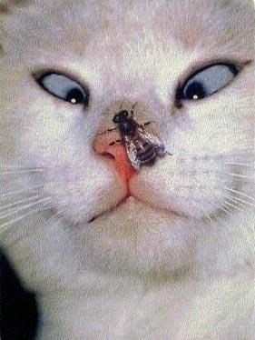 "Kitty-Cat: ""Oh Crumbs! A Bee! As you can plainly see! I do hope it won't sting me!"" (Written By: © Lynn Chateau.)"