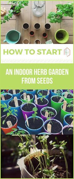 How to Start an Indoor Herb Garden from Seeds. How to start an indoor herb garden from seeds? It's easy. Creating an indoor herb garden from seeds is a good activity and an enjoyable one. Read now. #urbangardening #urbanfarming #gardening #diy #garden #ugrpost