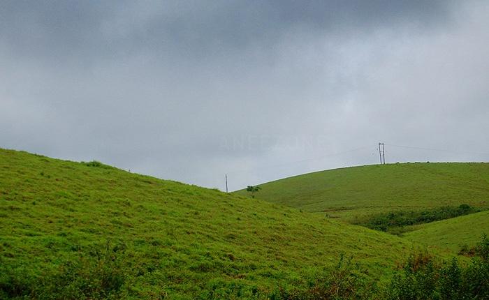Kerala tourism; green rolling hillocks of Vagamon