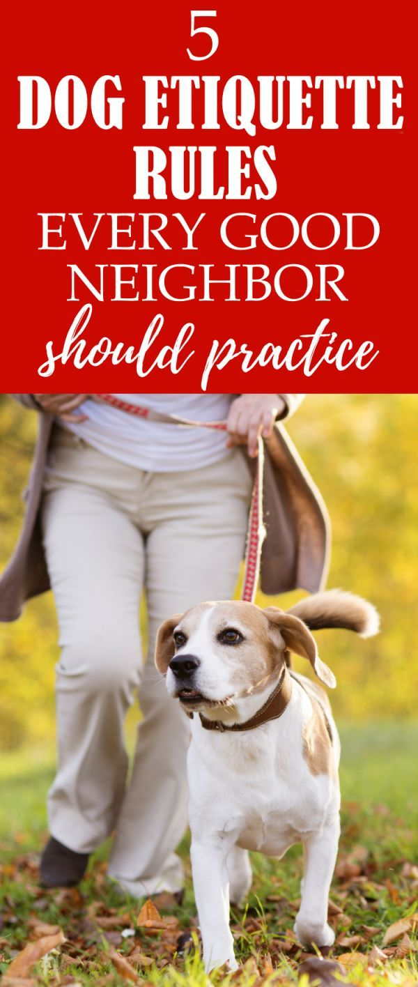 5 Dog Etiquette Rules Every Good Neighbor Should Practice Dog