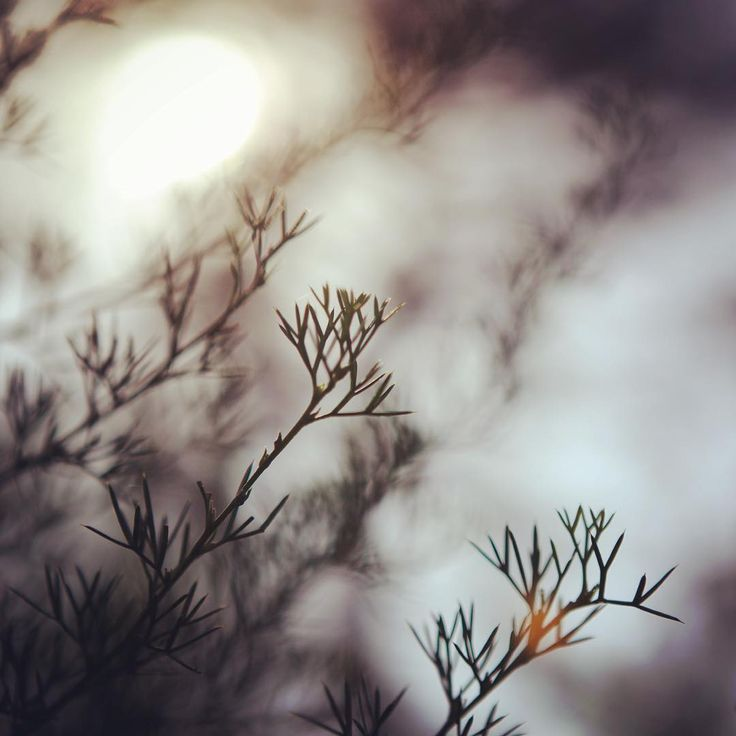 Fading out with the sun ... Little leaves basking in the soft and warm light of golden hour ...