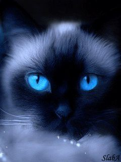 Download Animated 240x320 «Cat» Cell Phone Wallpaper. Category: Pets & Animals