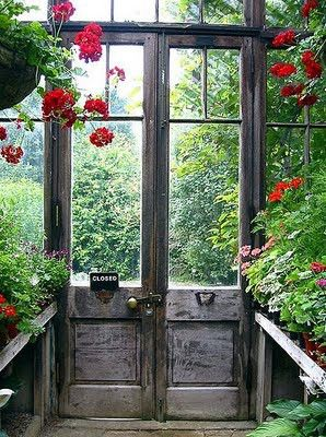 Hanging Geraniums in a potting shed/greenhouse.  What about this using our own salvaged doors/windows...Who cares if there's any glass in them... it's a summer folly full of plants!