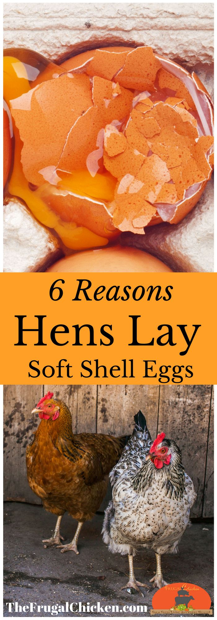 Soft shell eggs are 1/3rd freaky, 1/3rd disturbing, and 1/3rd cool as heck. But they also give you important clues to your hen's health. Here's the inside dirt, and whether you need to take immediate steps to help your flock.