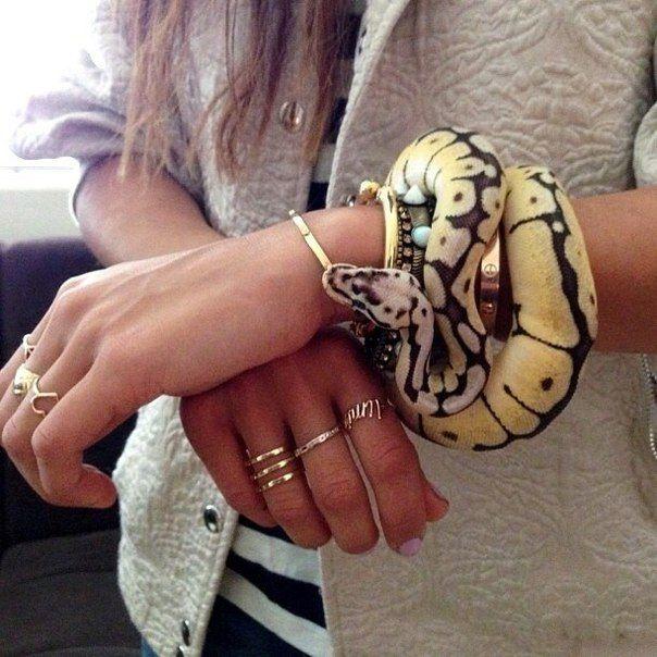 #snake #pet