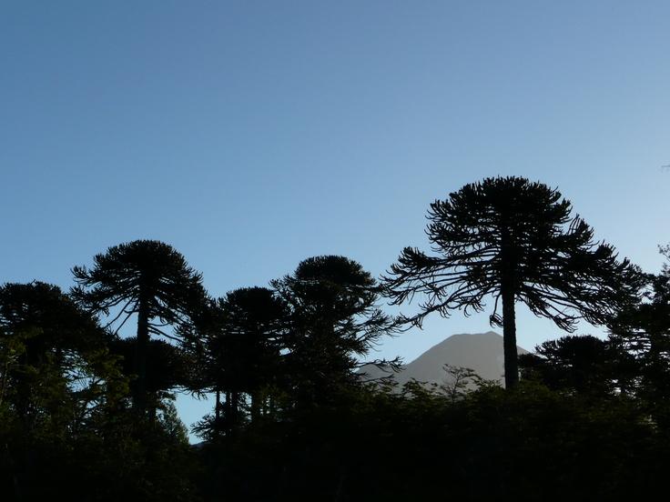 Volcan Conguillo - Chile