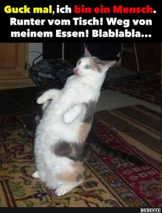 Besten Bilder, Videos und Sprüche und es kommen täglich neue lustige Facebook Bilder auf DEBESTE.DE. Hier werden täglich Witze und Sprüche gepostet! – Caro