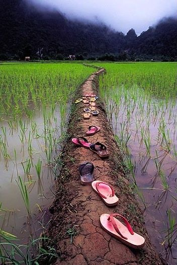 Places to walk before you die, the Rice Paddies of Vietnam /// #wanderlust #travel #backpacking