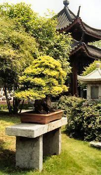 Bonsai Symbolism