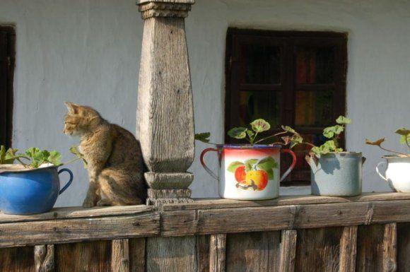 Hungarian countryside sokszinuvidek.hu Love to see cats when I travel.
