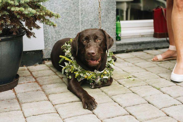 Wedding wreath • dog