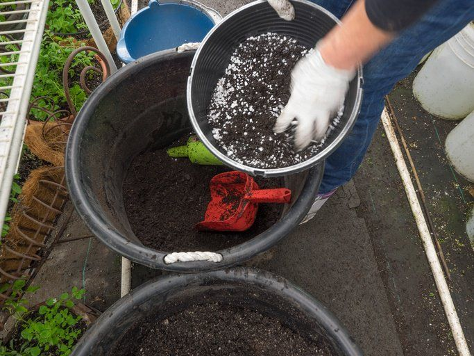What does it take to prepare a general purpose potting soil? A potting soil is only as good as the ingredients that go into its making. Unlike garden soil that is continuously subjected to changes due to exposure to the elements, you can have more control on the structure, composition and nutrient content potting soil. To facilitate optimum root run and provide proper drainage, the…   [read more]
