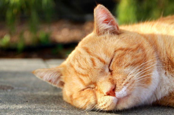 Ingles cat