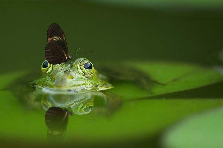 25 einzigartige was hilft gegen fliegen ideen auf - Was tun gegen insekten im pool ...