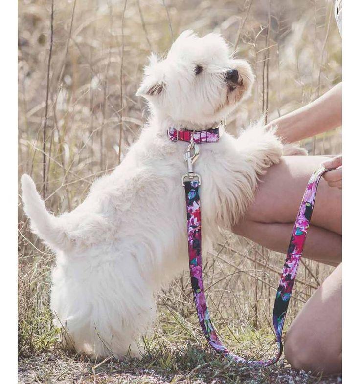 Collar para perro Brott textura Roses