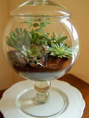 Tutorial for succulents grown in an apothecary jar