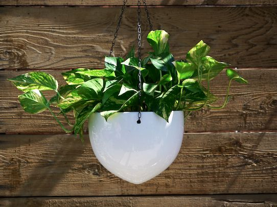 White Hanging Ceramic Bullet Planters At Sprout Home
