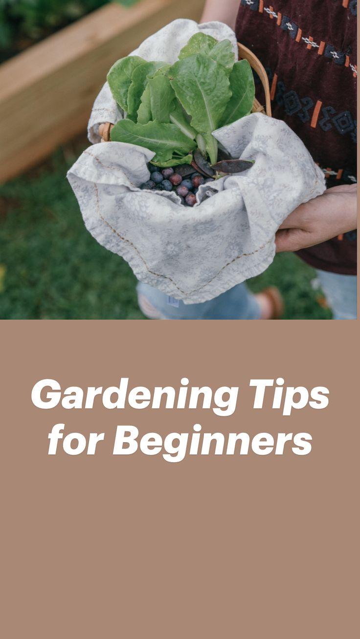 Garden Crafts, Garden Projects, Small Gardens, Outdoor Gardens, Lawn And Garden, Vegetable Garden, Container Gardening, Gardening Tips, Beginners Gardening