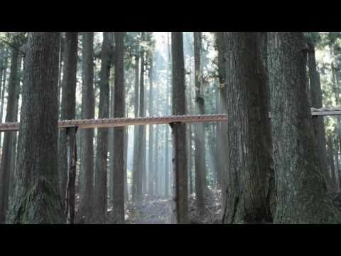 In a tranquil forest, a single wooden ball rolls down a stepped wooden ramp, continuously, for two minutes. At each step, it falls and strikes a wooden bar tuned to play a single note of the 10th movement of Bach's Herz und Mund und Tat und Leben, BWV 147, commonly known by its English title, Jesu, Joy of Man's Desiring. Wait 'till you see how they handle the sustained notes.