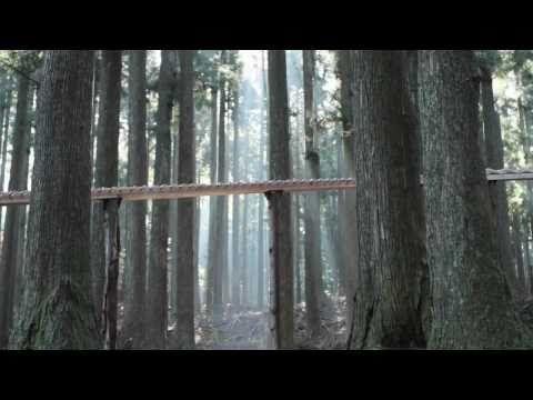 Bach die door de bomen schalt. Fantastische vondst.